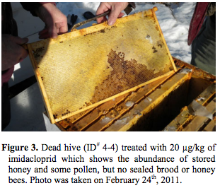 dead honeybees in colony collapse study
